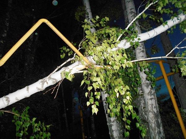 Третьего июня вырванное сильным порывом ветра дерево повредило газопровод низкого давления на ули