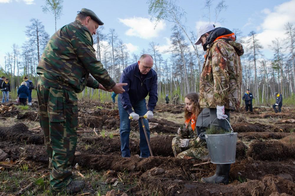 Глава региона отметил, что Челябинский бор похож на реликтовый в тех местах, где нет поблизости ж
