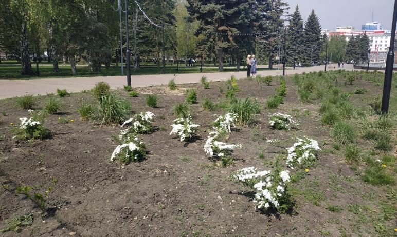 В Центральном районе Челябинска высадят 340 тысяч цветов на общей площади пять тысяч квадратных м
