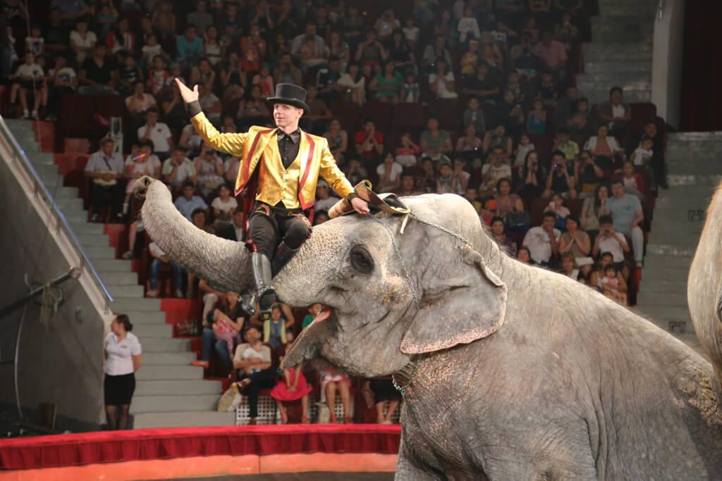 В челябинском цирке с 10 июня зрители могут увидеть уникальное «Шоу слонов великанов». Шоу