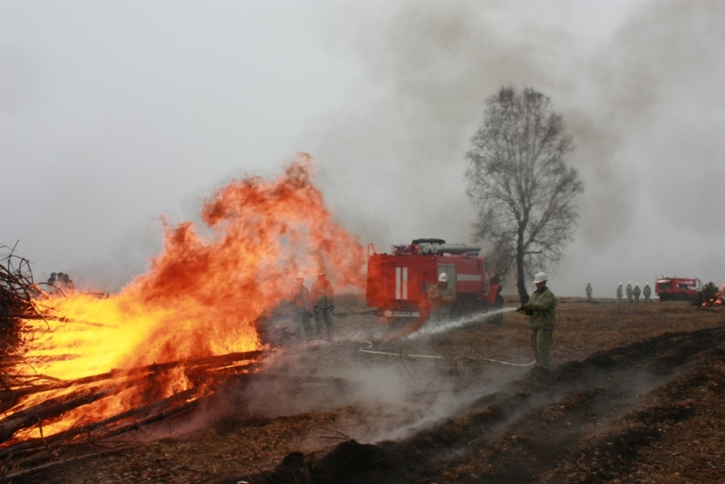 Как сообщили в главном управлении лесами региона, огнем только за понедельник пройдено 82,16 гект