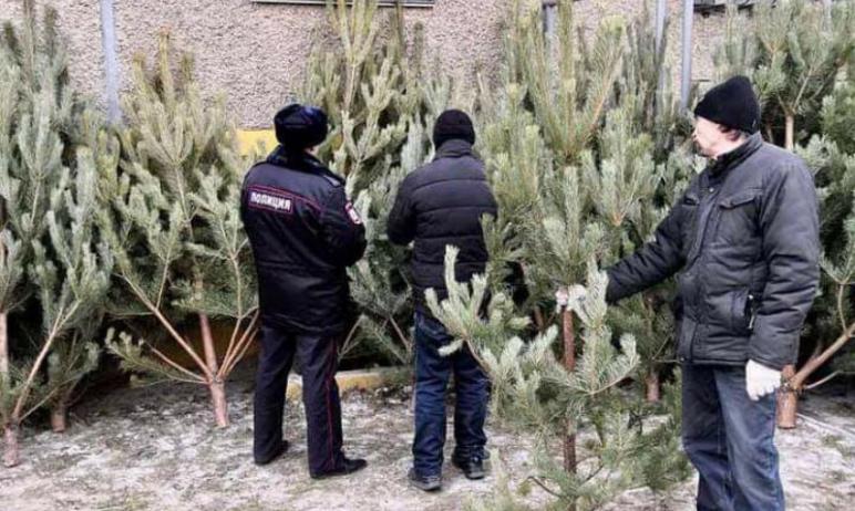 В Ленинском районе Челябинска торговцев елями лишили вечнозелёного товара, так как деревья они пр