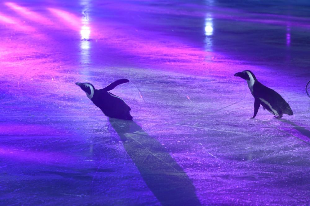 Челябинская область второй раз в это году становится домом для фигурного катания – в начале года