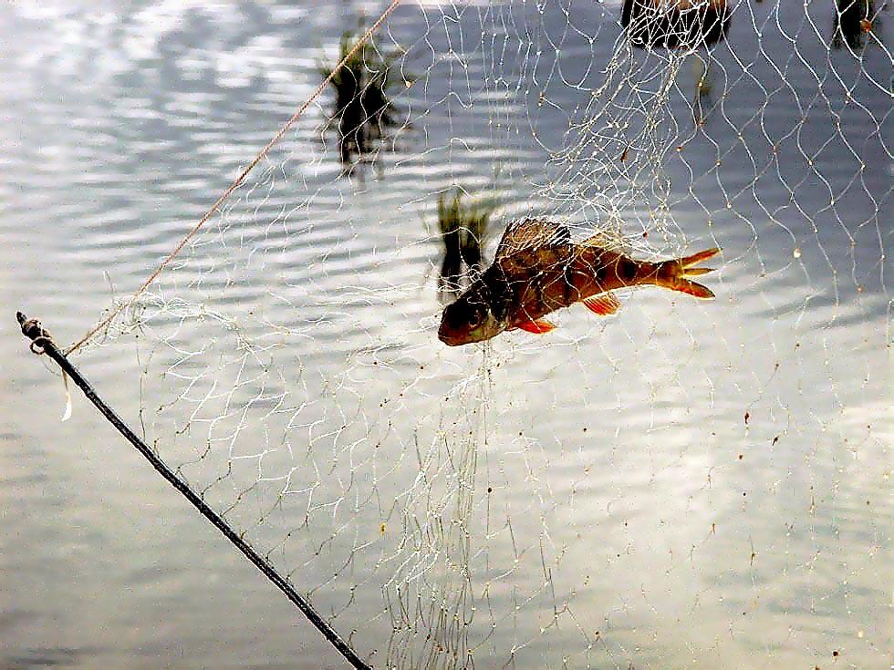 В Кыштыме (Челябинская область) рыбак лишился и рыбы, и снастей. Фигурантом административн