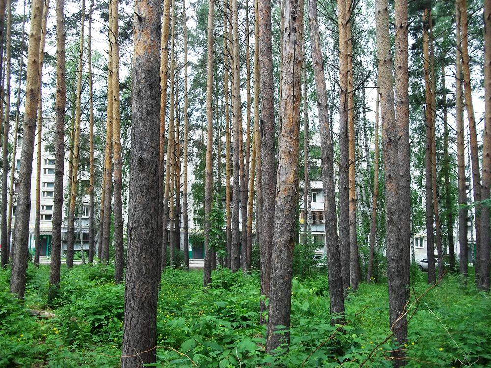 Чтобы побывать в Рощино, надо свернуть со Свердловского тракта и проехать лесной дорогой