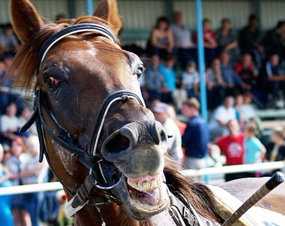 В Магнитогорске (Челябинская область) началось строительство конно-спортивного комплекса с крытым