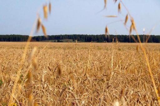 Областной закон «О бесплатном предоставлении земельных участков в собственность граждан для индив