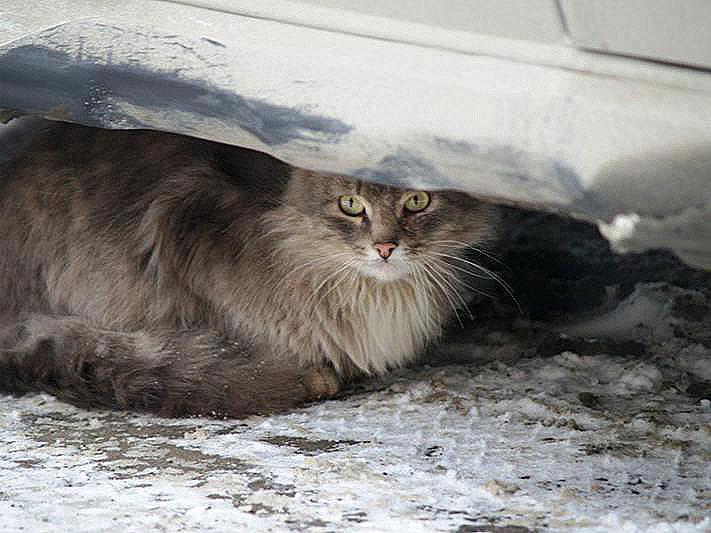 Как сообщало агентство «Урал-пресс-информ», на операционный стол котенок попал вчера, 14 августа.