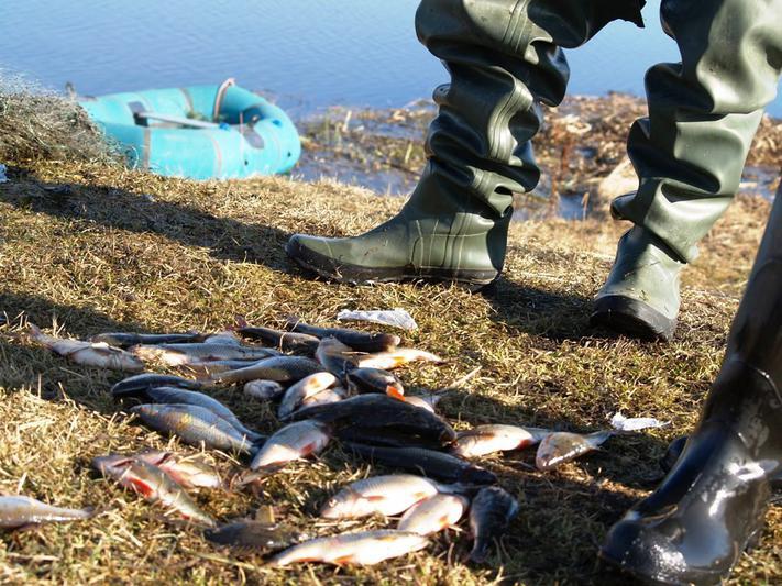 Самые большие уловы на сегодня у тазовских рыбаков. На долю предприятия «Тазагрорыбпром» приходит