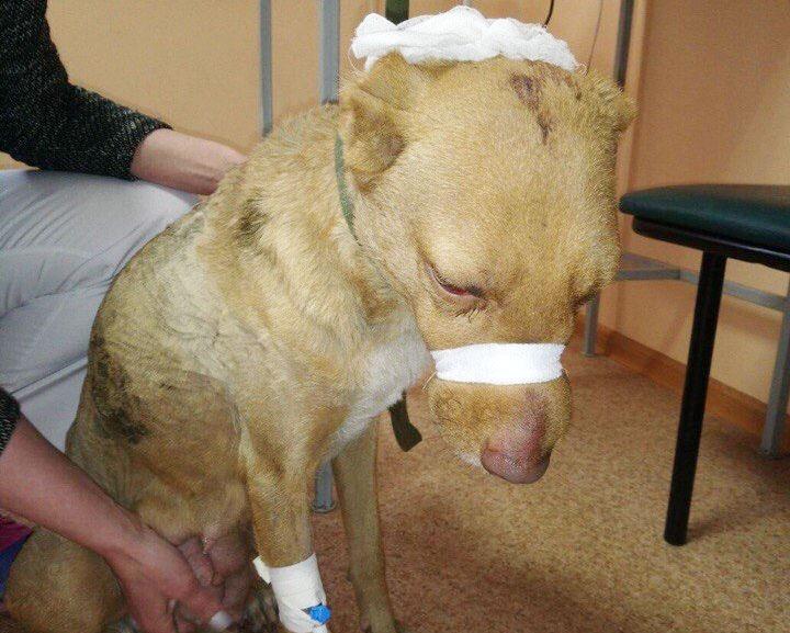 В Магнитогорске (Челябинская область) жестоко избили собаку, отрезали уши и посадили в мусорный б