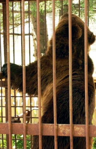 В суд передано уголовное дело в отношении жителя Нязепетровского района (Челябинская область), ко