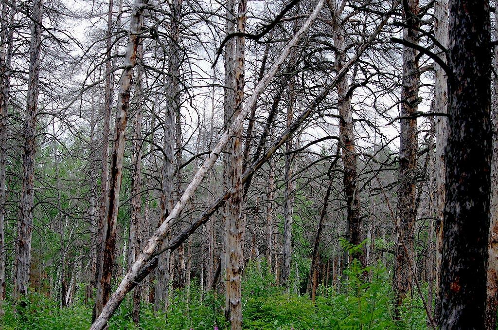 Дело в том, что в России вступил в силу закон о «зеленом поясе». Документ регламентирует создание