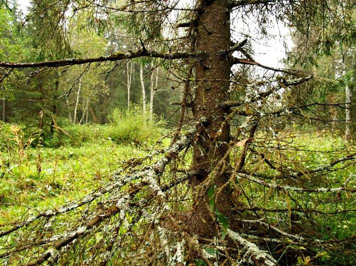 В Миассе навигатор завел двух подруг в чащу леса. «Потеряшкам» на помощь пришли спасатели.