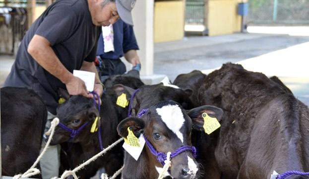 Этот шаг был сделан спустя неделю после того, как правительство запретило продажу всех партий мяс