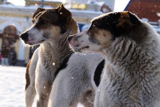 На перекрестке улиц Дегтярева и Трудовая на женщину с ребенком напала стая диких собак. «Мы шли с