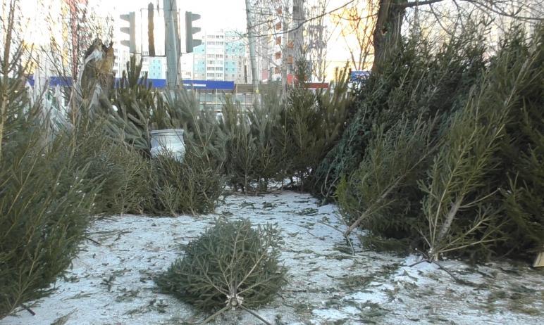 Жителей Челябинска призвали выбрасывать новогодние ели на мусорки возле многоквартирных домов. С