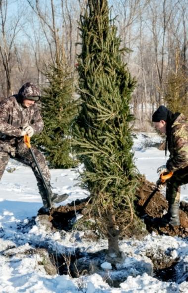 В Магнитогорске (Челябинская область) в уходящем году высажено больше четырех тысяч деревьев, свы