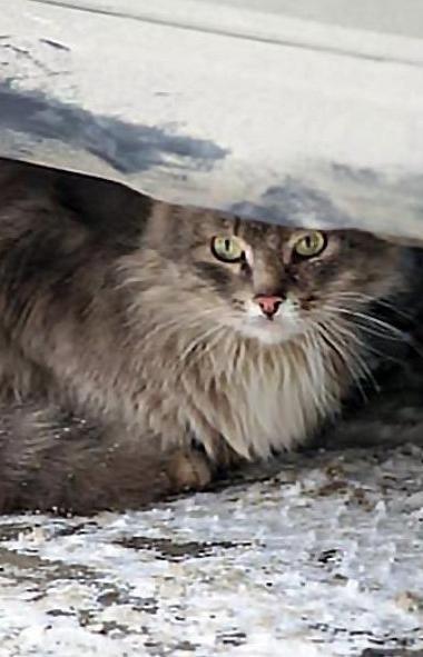 Челябинская ветстанция предоставит 50-процентную скидку на услуги к Всемирному дню защиты животны