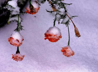 По первому снегу. 19 октября в Челябинске