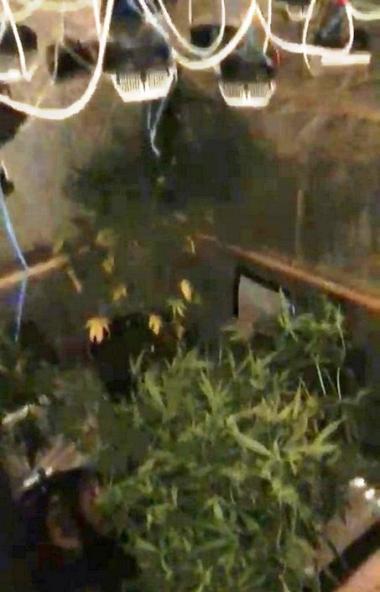 Житель Челябинска, попавшись на улице с десятью граммами марихуаны, привел полицейских в нарколаб