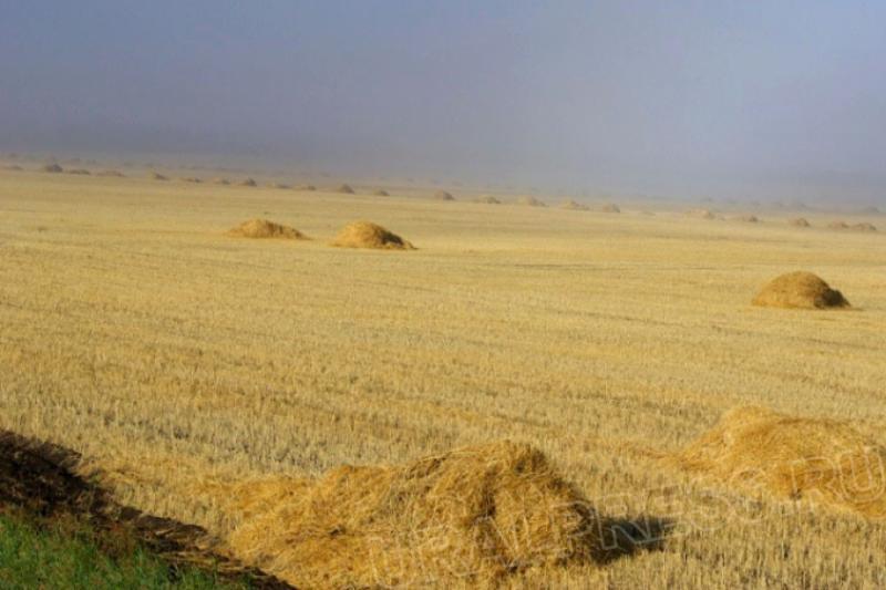 Челябинская область планирует покрыть дефицит пшеницы. И начать массово возделывать редкие для ре