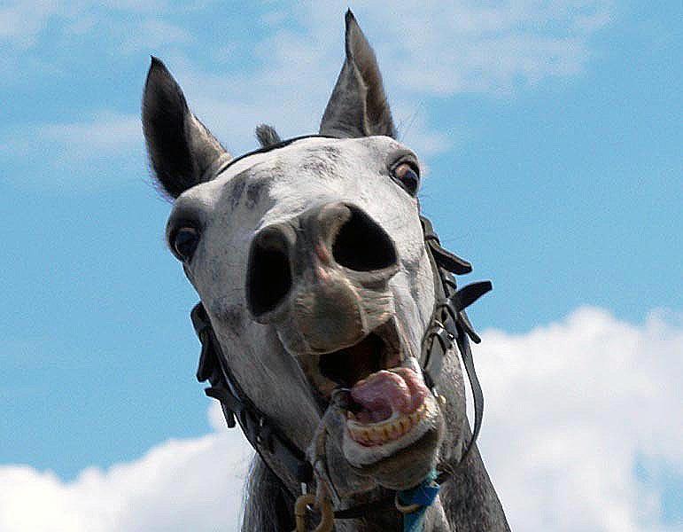 Из Челябинской области не выпустили лошадь, которую из Пензы в Костанай вез житель Казахстана.
