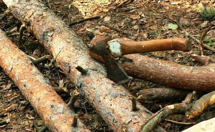 В Кыштыме (Челябинская область) 46-летний предприниматель арестован за незаконную рубку лесных на