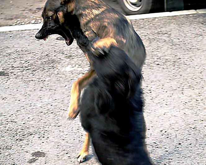 По решению суда хозяин пса породы алабай должен выплатить женщине 30 тысяч рублей.