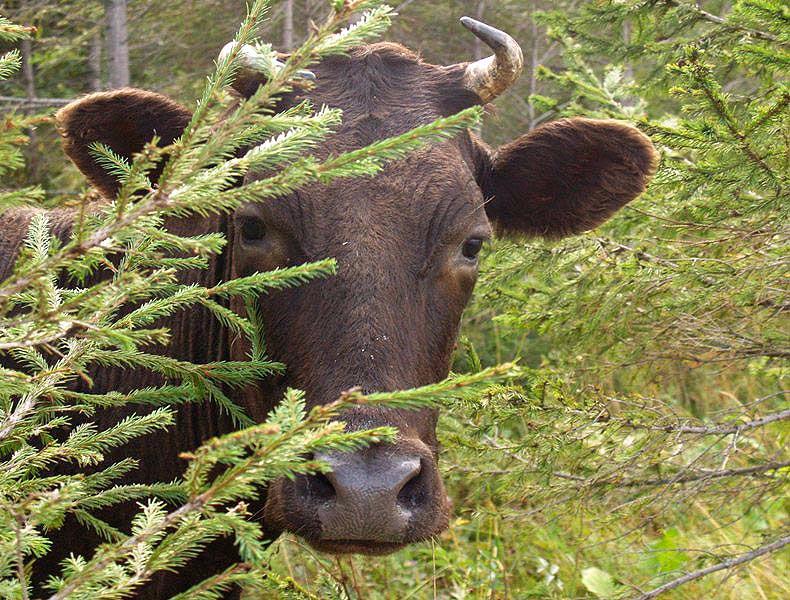 От действий похитителей животных пострадали двадцать человек из шести районов Южного Урала, в осн