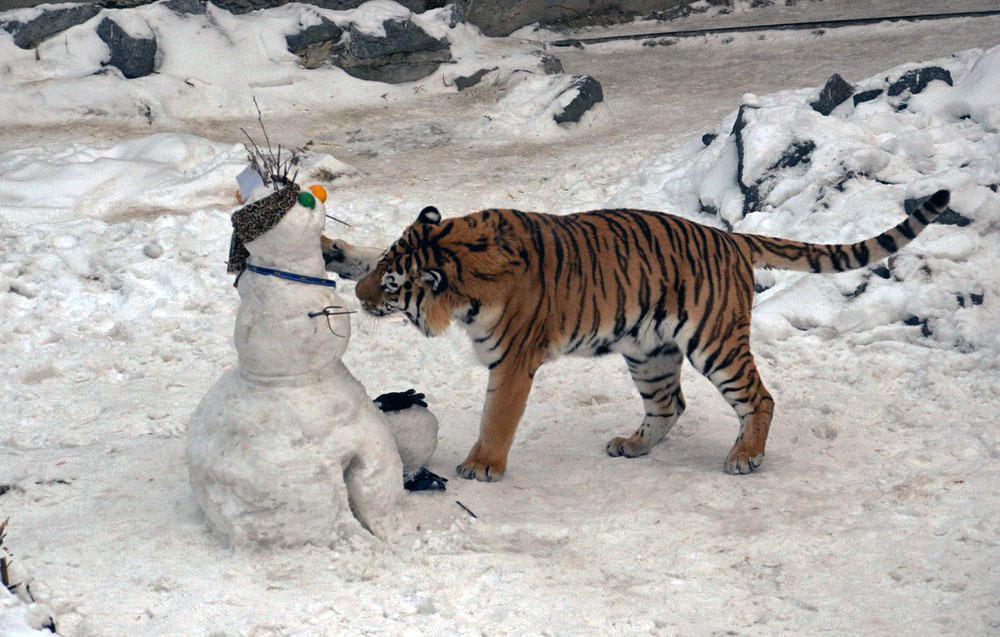 Для четвероногих обитателей учреждения будут построены горки, снеговики со вкусными «начинками»,