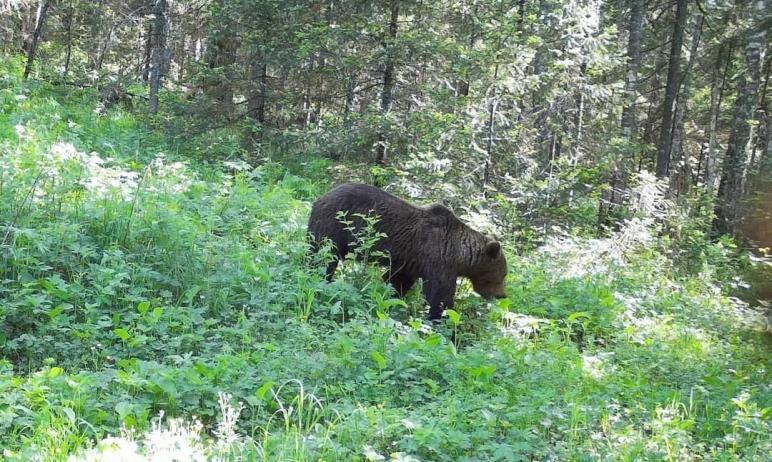 В национальном парке «Зигальга» (Катав-Ивановский район, Челябинская область) фотоловушки «поймал