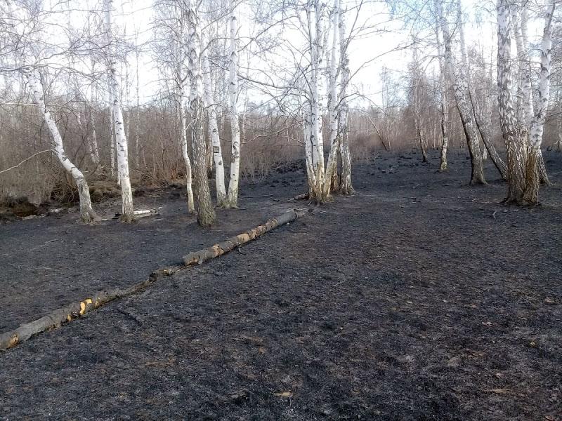 В Кунашакском районе (Челябинская область) задержан поджигатель сухой травы. Возбуждено уголовное