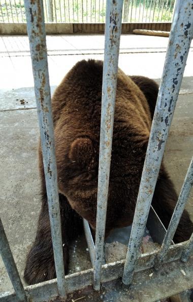 Жители Челябинской области объединились в помощи оставшемуся без хозяина медведю по кличке Малыш.