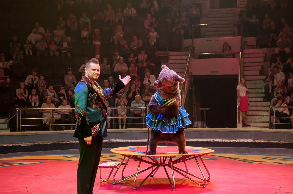 В Челябинск приехала знаменитая на весь мир династия цирковых артистов Филатовых, которая уже бол
