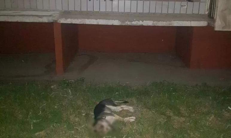 В Челябинске мужчина сбросил с балкона восьмого этажа щенка овчарки. Собака еще была жива какое-т