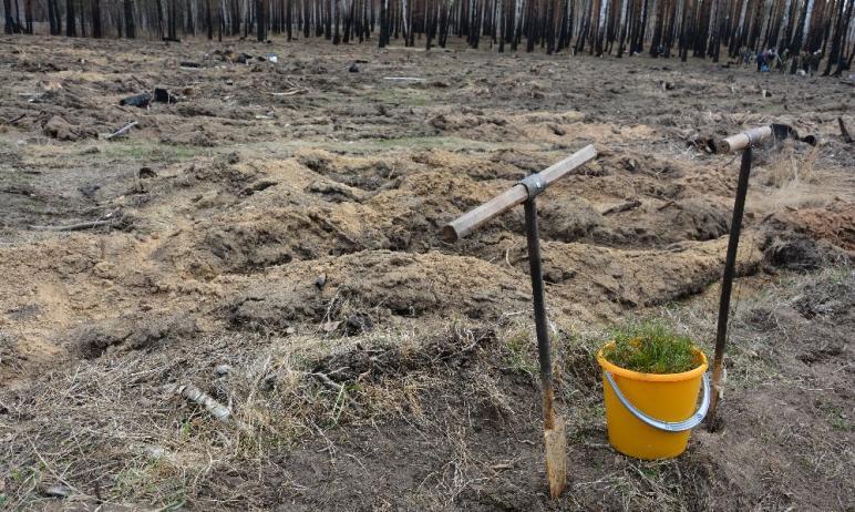 На Южном Урале разрастается «Сад Памяти» - к международной акции в память о 27-ми миллионах погиб
