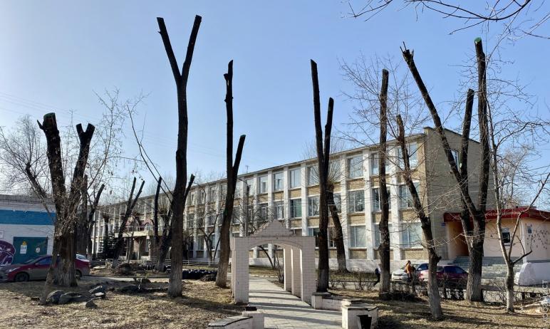 В Челябинске «освежевали» деревья рядом с одним из сильнейших образовательных учреждений региона