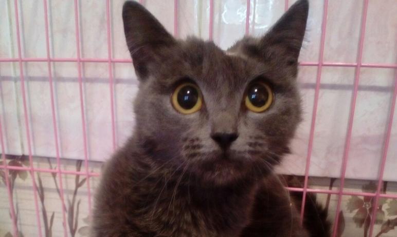 В Челябинской области с начала 2021-го года бешенство выявлено у пяти кошек и пяти собак, а также