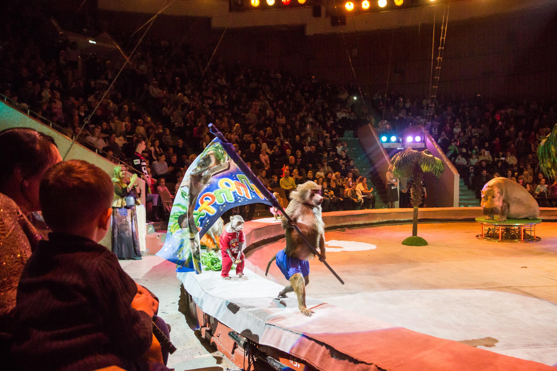 В челябинском цирке уже совсем скоро, 21 июля, состоится премьера нового шоу продюсерского центра