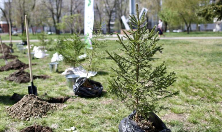 Губернатор Челябинской области Алексей Текслер принял участие в международной акции «Сад Памяти».