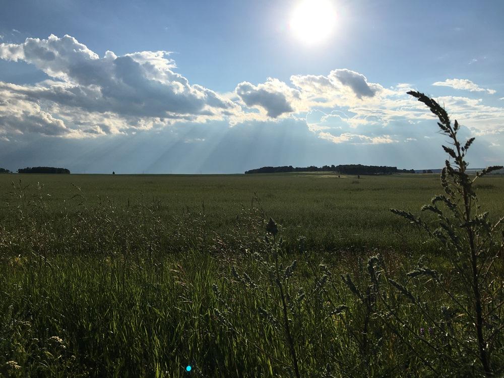 В Челябинской области в 2019 году памятник природы регионального значения - Каштакский бор - увел