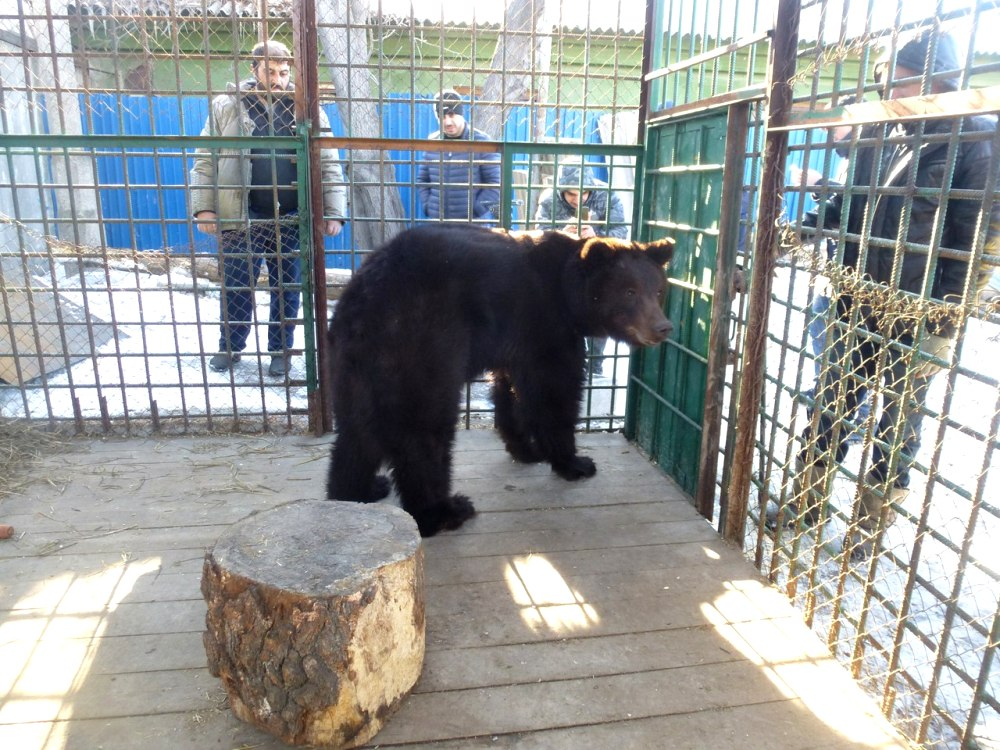 «Медведица сейчас в нормальном состоянии. Она немного исхудала, но очень быстренько поправится. Е