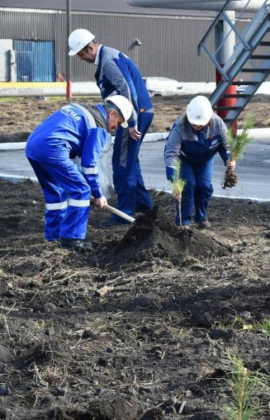 Завод «Мечел-Кокс» (входит в Группу «Мечел») в рамках всероссийской акции «Сохраним лес» высадил