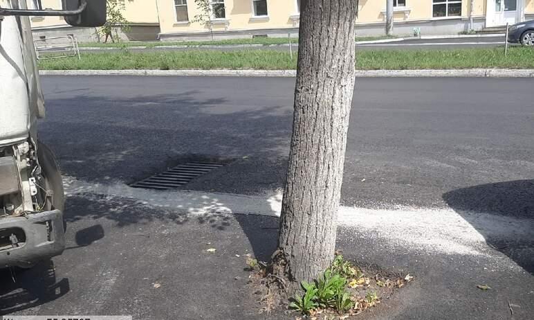 В Миассе (Челябинская область) в рамках благоустройства города десятки деревьев «закатали» в асфа