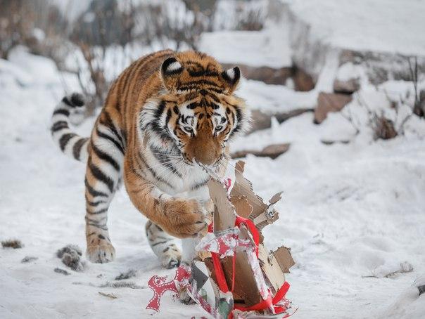 Как сообщили агентству «Урал-пресс-информ» в зоопарке, волонтерское движение здесь появилось отно