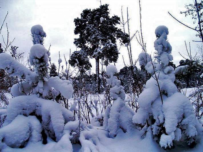 В преддверии Нового года, 24 декабря, юные челябинцы и гости Челябинска станут первыми зрителями