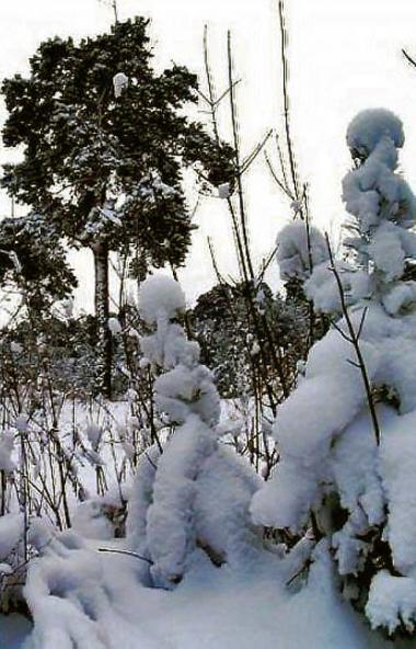 На Рождество, 7 января, в Челябинской области ожидается облачная погода, в большинстве районов пр