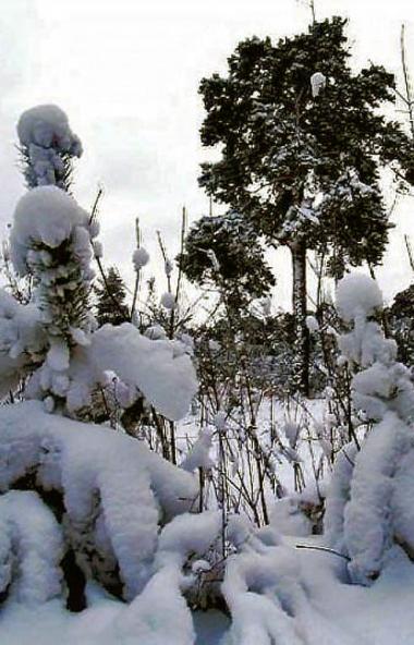 В большинстве районов Челябинской области установился снежный покров. Его высота достигает от 3 д