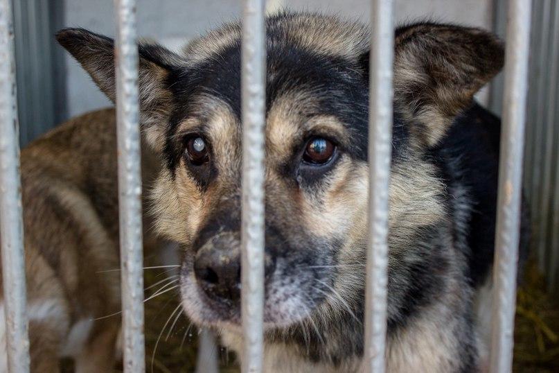 В Челябинске центр помощи бездомным животным в лице выигравшего тендер на отлов ООО «Продлидер» з