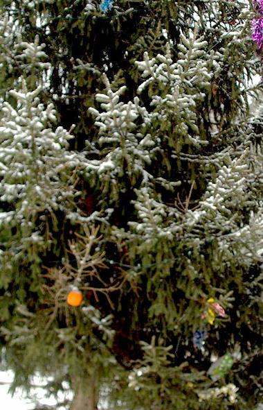 Во вторник, 11 февраля, в Челябинской области ожидается малооблачная погода, без осадков.